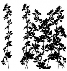 shrub silhouette vector image vector image