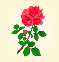 Twig red rose with leaves and bud vector