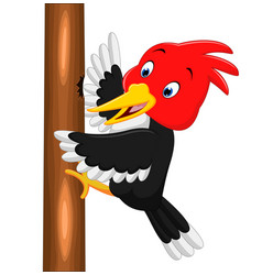 Woodpecker bird cartoon vector