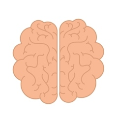 Human brain organ vector