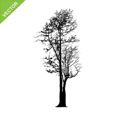 Dead tree silhouettes vector image vector image