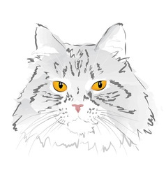 Muzzle gray cat vector
