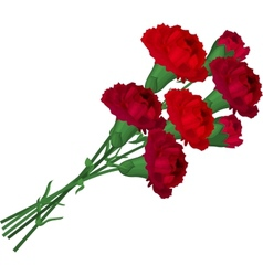 Bunch with red carnations vector image