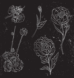 collection of silver hand drawn peony and vector image