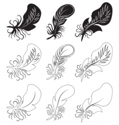 fluff and feathers vector image