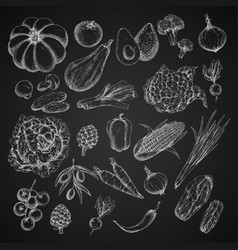 Vegetables chalk sketch icons set vector