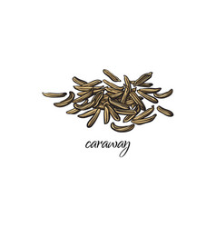 pile heap of dried caraway cumin seeds vector image