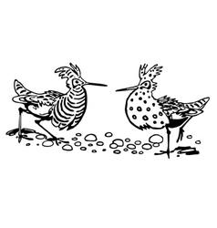 ruff bird vector image vector image