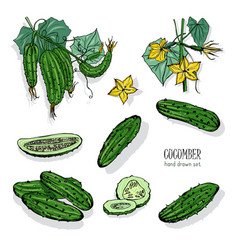 Set of different cucumber on branch flowering vector