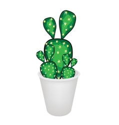 Cactus Opuntia Microdasys in A Flower Pot vector image vector image