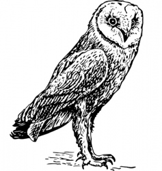 owl tyro alba sketch vector image
