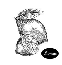 hand drawn sketch style fresh lemon vector image