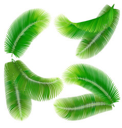 Tropical palm leaf vector