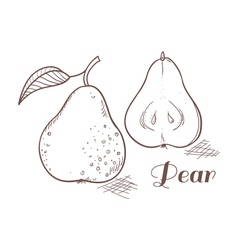 Engraving pear in vector
