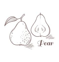 Engraving pear in vector