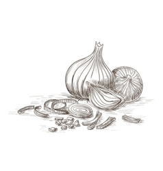 Hand drawn onions vector