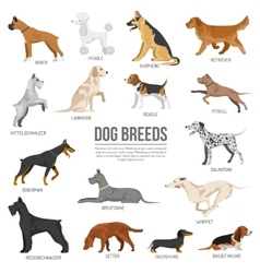 Dogs breed set vector image vector image