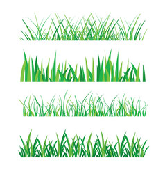 green grass isolated vector image