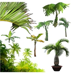 Set of different palm trees vector