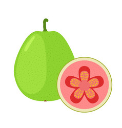 guava exotic fruit whole slice in flat cartoon vector image