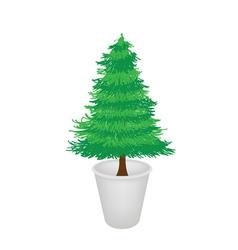 Pine tree in a flower pot vector