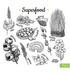 Superfood hand drawn vector