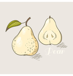 Yellow pear vector