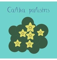 flat stylish background plant Caltha vector image vector image