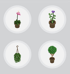 Isometric houseplant set of grower blossom tree vector