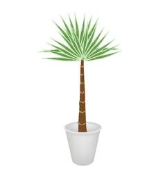 A Palm Treesin Flower Pot vector image