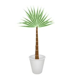 A palm treesin flower pot vector