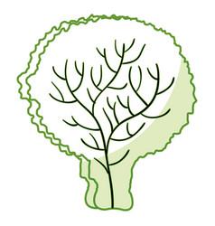 Lettuce fresh vegetable icon vector