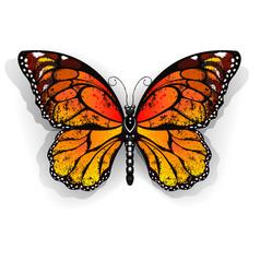 Orange butterfly monarch vector