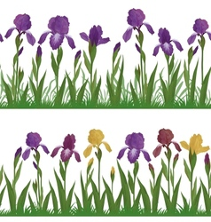 Flowers iris and grass set seamless vector