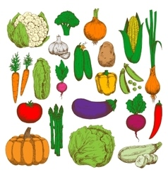 Healthy and juicy fresh vegetables sketch symbol vector