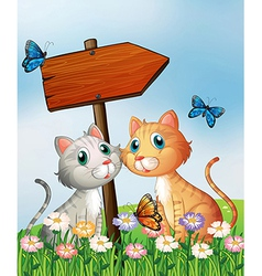 Two cats in front of an empty wooden arrow board vector image
