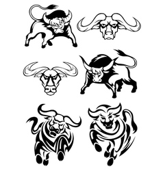 Black and white bulls or buffaloes vector