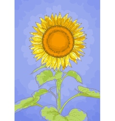 Sunflower and blue sky vector