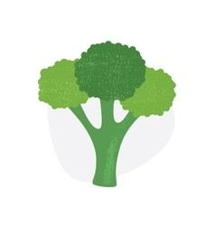 Broccoli isolated on white background vector