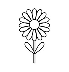 Figure beauty flower plant with petals and leaves vector