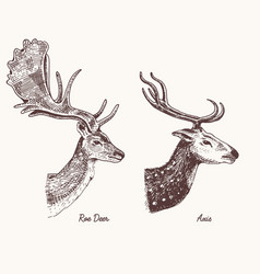 Roe deer or doe axis or indian dotted hand vector