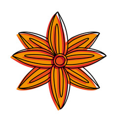 anise star seed icon image vector image