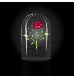 Red rose under a glass dome vector