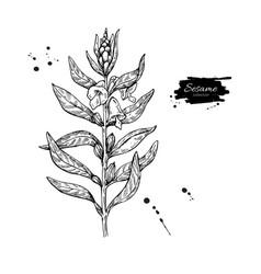 Sesame plant drawing hand drawn food vector