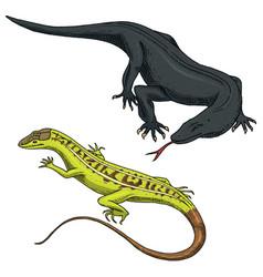 Komodo dragon monitor american sand lizard vector