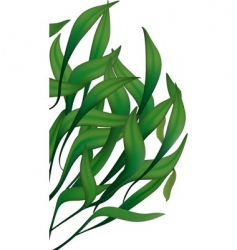 Green long leaves vector