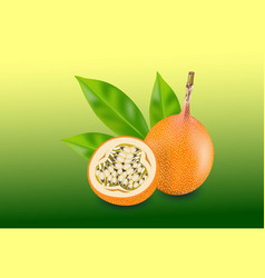 passion fruit isolated fruit vector image