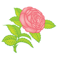 Retro pink roses in classic style vector