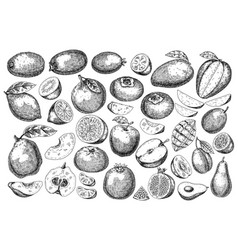 hand drawn sketch style fresh fruit vector image