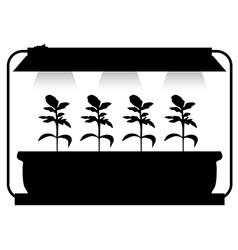 seedling lighting vector image vector image